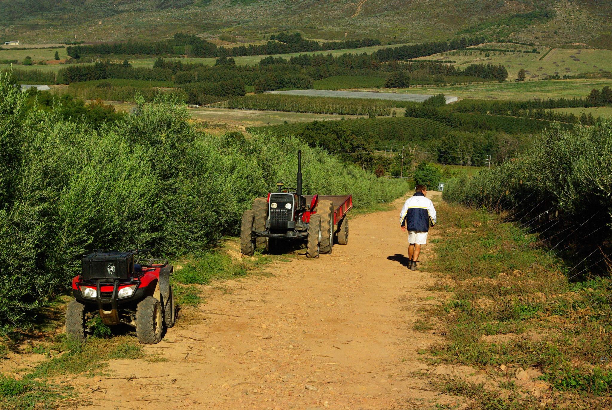 Oakhurst Olives Farm